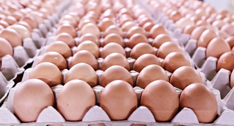 GRADE 1 FRESH FARM EGGS FOR SALE