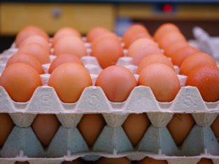 fresh eggs for sale in south Africa